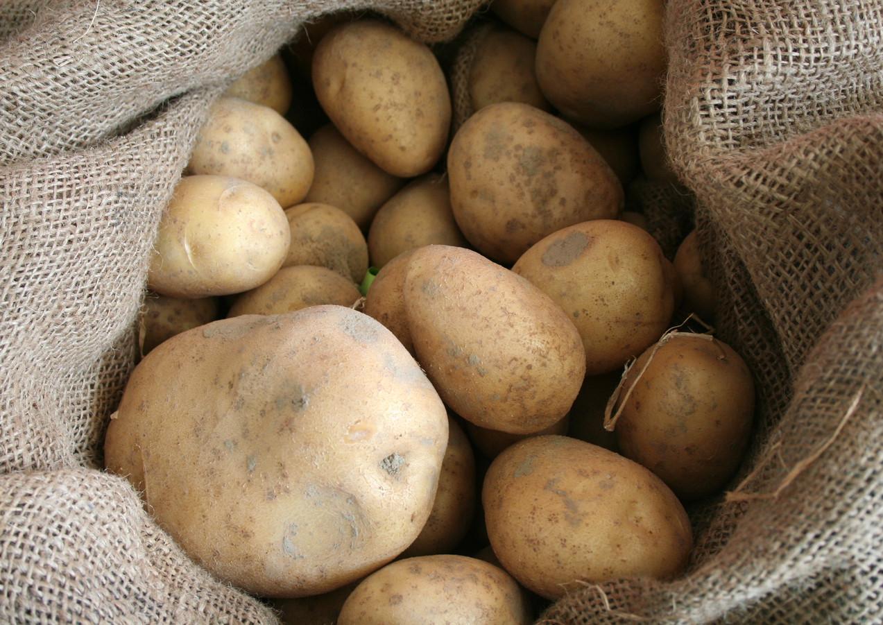 Kartoffel3