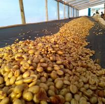 Brazil Fazenda Guariroba