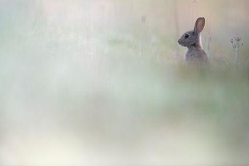 rabbit web (1 of 1).jpg