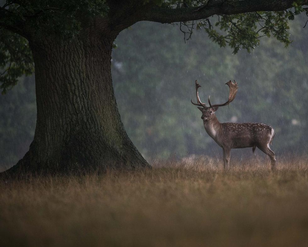 Deerbanner (1 of 1).jpg