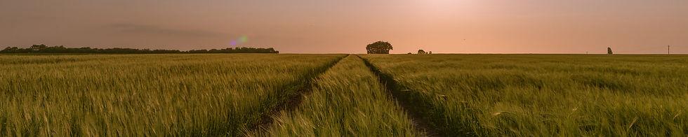 sunset-over-summer-fields_t20_e8Q6yo.jpg