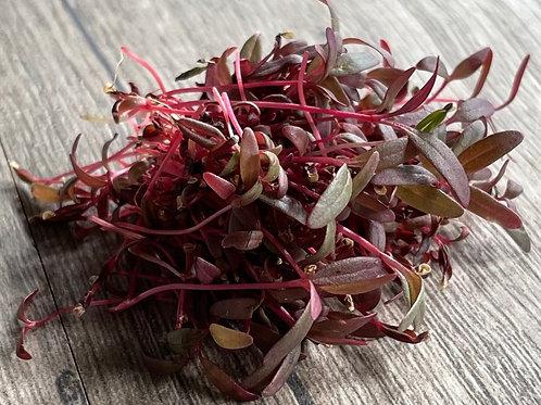 Organic Amaranth Microgreens