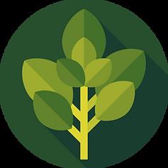 281-2810951_basil-free-icon-herb.png