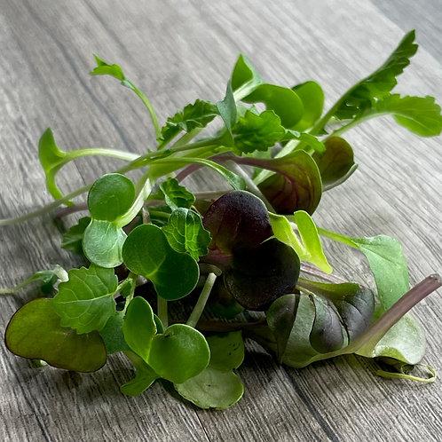 Organic Radish Blend
