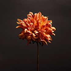 PORTRAITS OF FLOWERS...