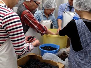 ワイン造り体験講座募集のお知らせ
