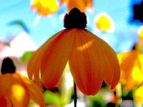 Flower Drop ( Framed 8x10 print)