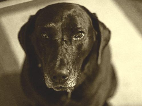 Portrait of Callie Gurl ( Framed 11x14 Print)