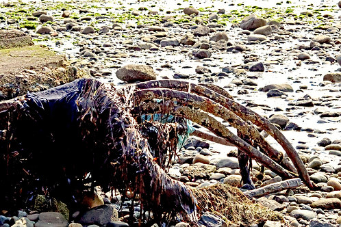 The Beach Creature ( Framed 8x12 Print)