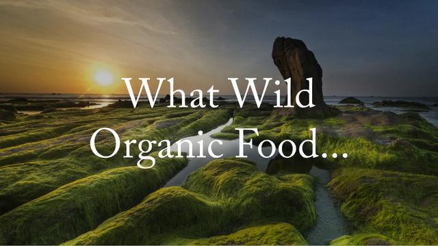 The Wonderful Benefits of Wild Crafted Blue Algae.