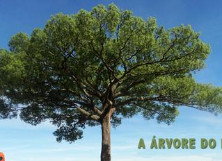 A árvore do pai