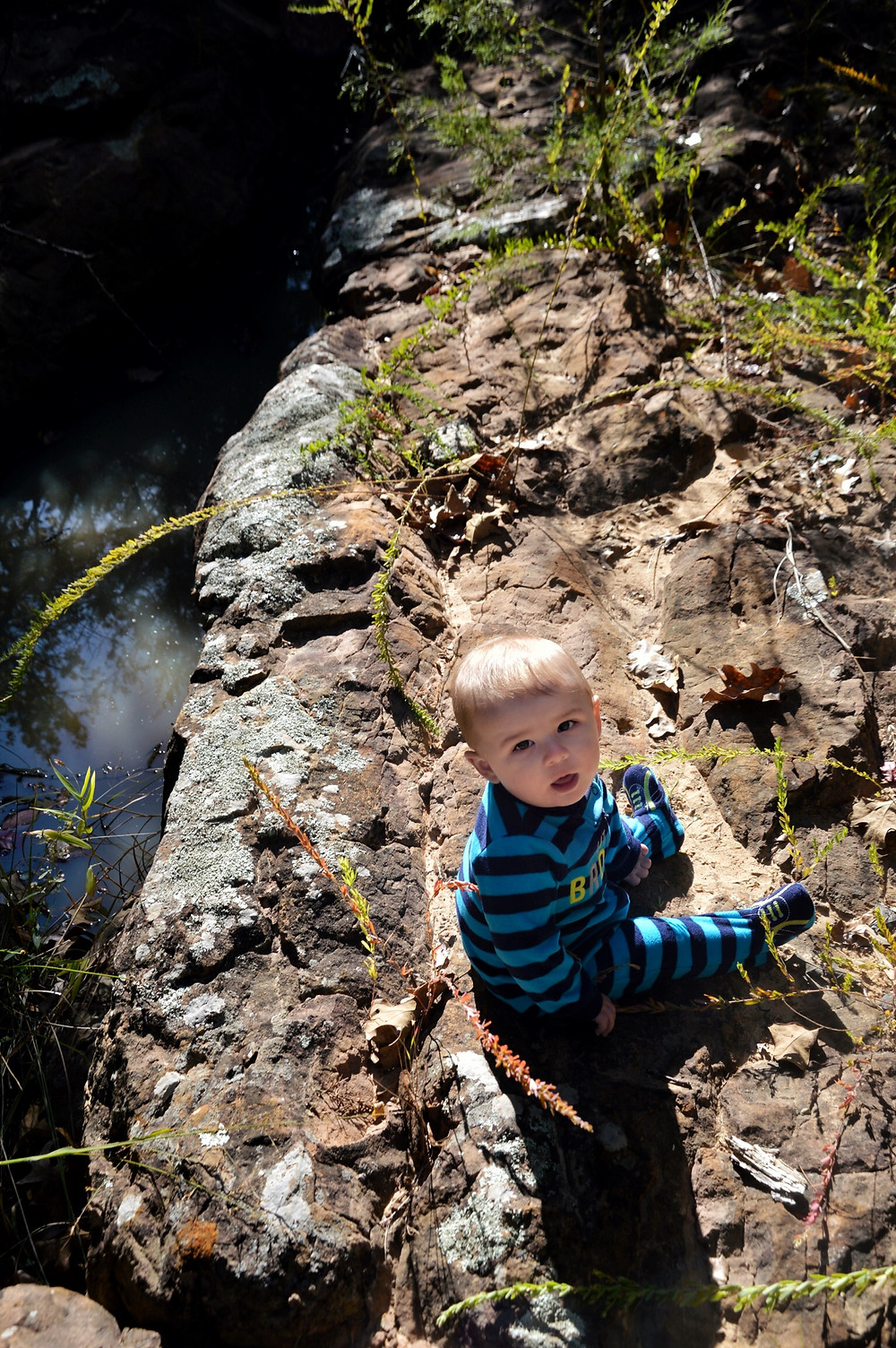 Landry, relaxing near the creek at Royal Roost Farm