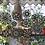 Thumbnail: פרחים שחורים