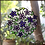 Thumbnail: עיגול פרחים סגול