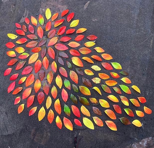esd.autumnleaves.jpg