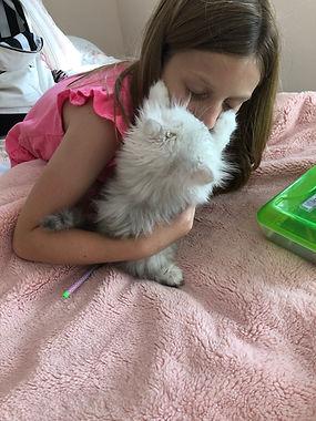 Persian kitten for sale in Texas