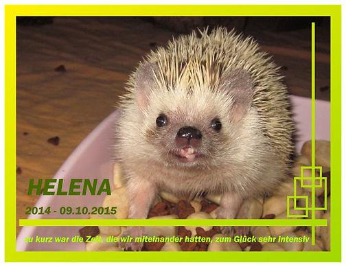 Helena024 09.09.2015a.jpg