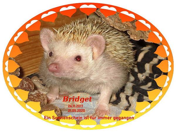 Bridget088 24.06.2019a.jpg