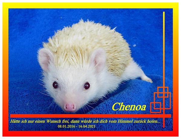 Chenoa176 28.05.2020a.jpg