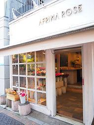 afrika rose.JPG