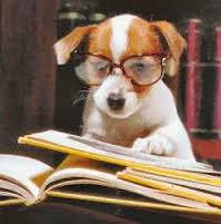 chien qui lit.jpeg