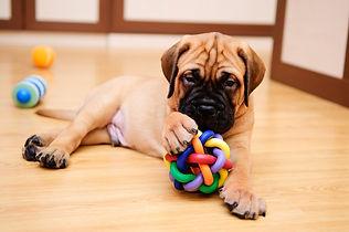 jouet-chien-full-12558817.jpg