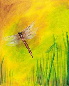 dragonfly_dreams.jpg