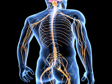 Sciatica commonly occurs when a herniated disk compresses part of a nerve in the lowback.