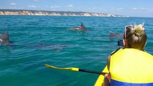 Dolphin + Kayak Tour