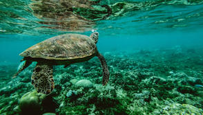Great Barrier Reef + Rainforest