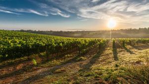 Yarra Valley - Wine Tasting
