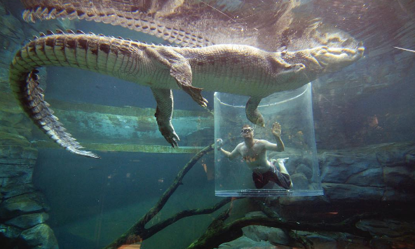 Croc Cove / Cage of Death