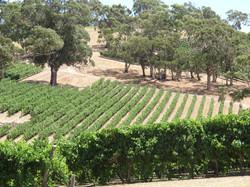 longview-winery-1364488_1280.jpg