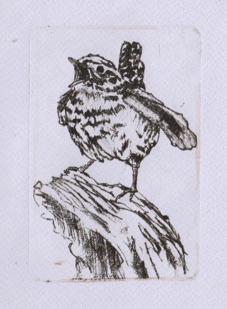 Drypoint Wren