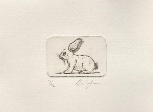 Rabbit Etching