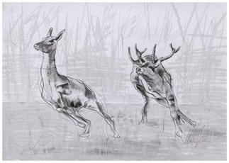 Running Deers