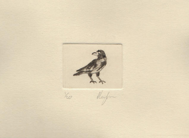 Pied Crow Etching