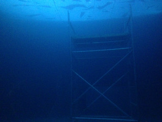 This must be underwater love