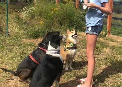 sam with dogs.jpg