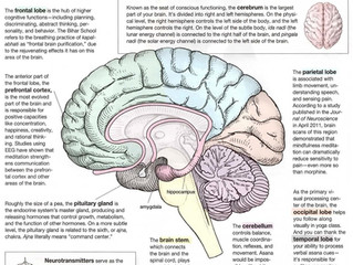 Yoga Boosts Brain Function