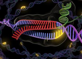 A CRISPR Future: Five Ways Gene Editing Will Transform Our World