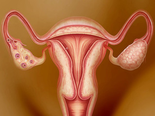 Ovarian transplantation might be possible in future