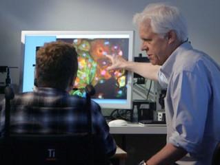 New CRISPR method efficiently corrects Duchenne muscular dystrophy defect in heart tissue