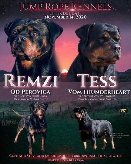 Tess Remzi 2020.jpg