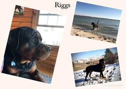 riggs7.jpg