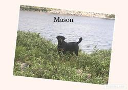 pink mason.jpg