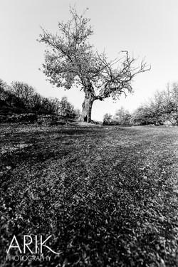 1312-Castelfeder-007.jpg