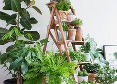 plants improve air quality indoors