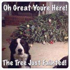 Christmas tree mishap