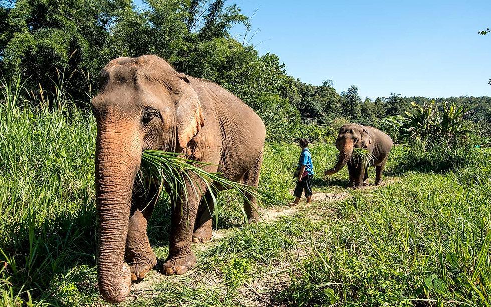 elephant-trails.jpg